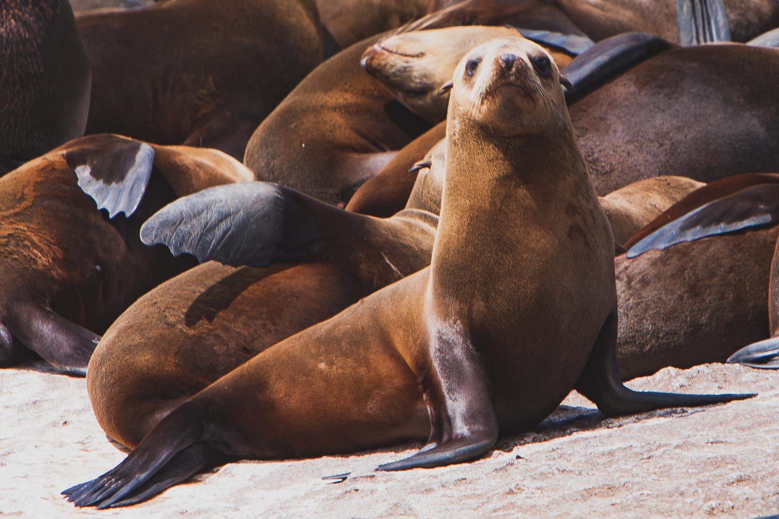 20071213 - Cape Point Tour -071213 -006