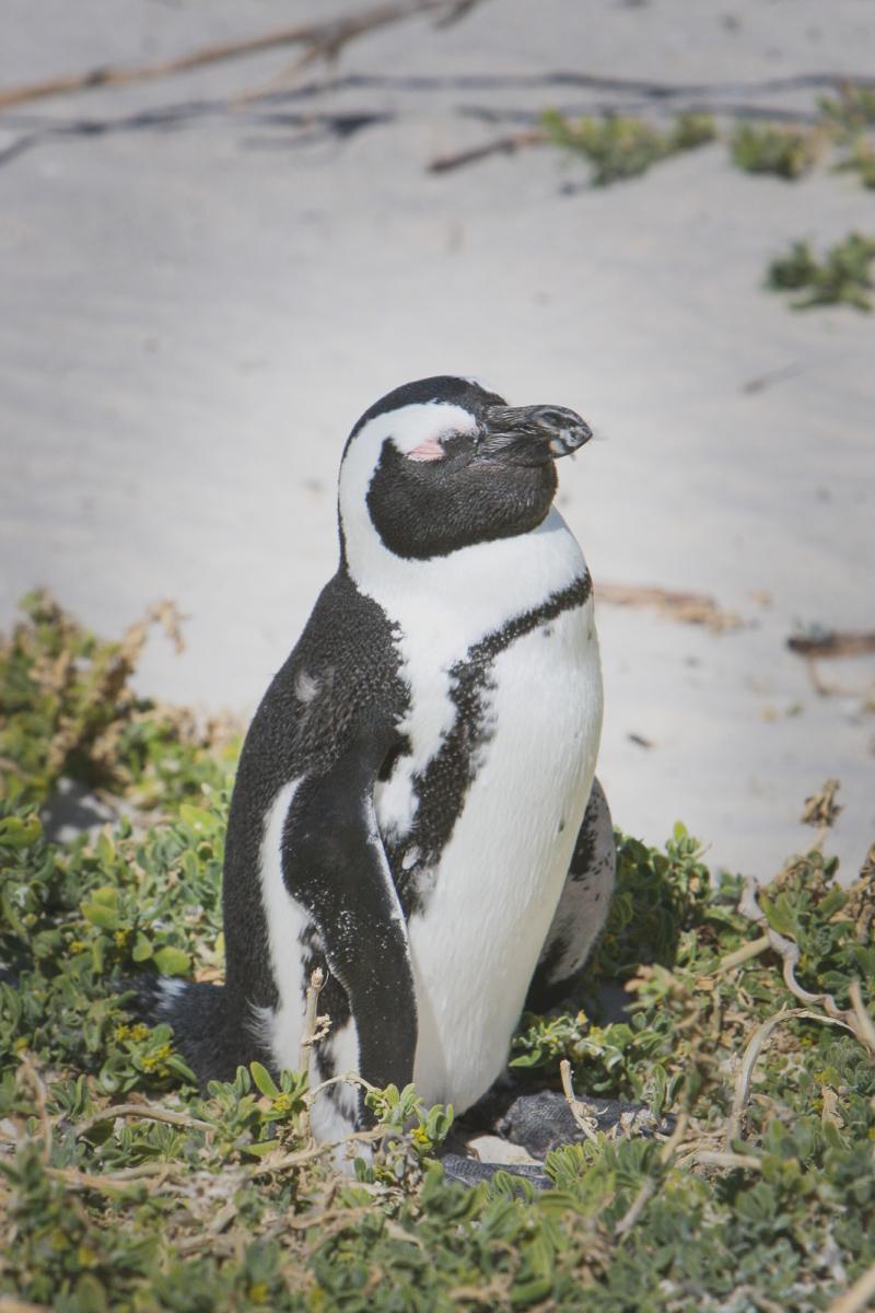 20071213 - Cape Point Tour -071213 -009